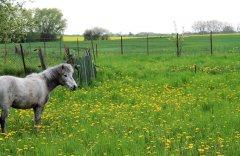 pferde-zierow.jpg